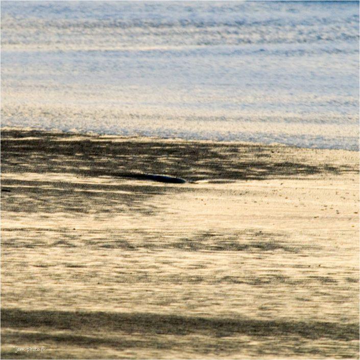 Beachboy-13 abstrait JeanClaudeM jcm-photo
