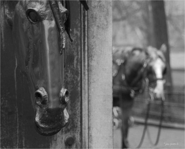 Frères jumeaux JeanClaudeM jcm-photo chevaux