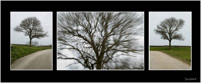 Solitaires JeanClaudeM jcm-photo arbres