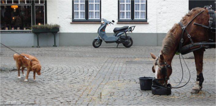 y'en a toujours que pour les gros_jcm-photo_JeanClaudeM_chien_cheval